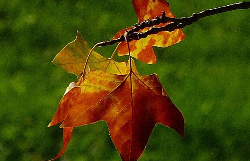 Beköszönt a csillagászati ősz