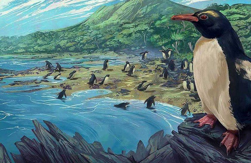 A pingvinek eredetéről vallanak Új-Zéland kövületei