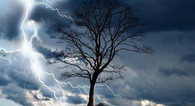 A trópusi fák gyakran pusztulnak el villámcsapás miatt