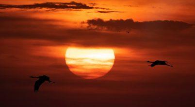 A nap képe: Napdarvak