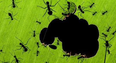 Ezek lettek 2020-ban a világ legjobb rovarfotói