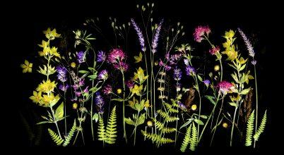 Fogyatkozóban a világ növényeinek sokszínűsége