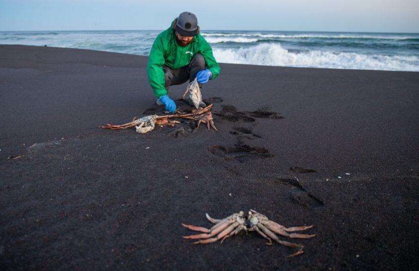 Algák okozták a tömeges élőlénypusztulást Kamcsatka partjainál