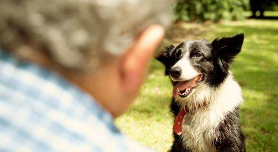 Így változik a kutyák személyisége az életük során