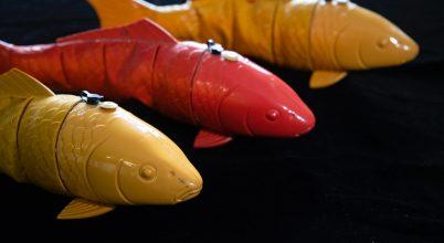 Robothalak segítségével vizsgálták a halrajokat