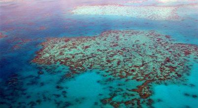 Már a Nagy-korallzátony fele elpusztult