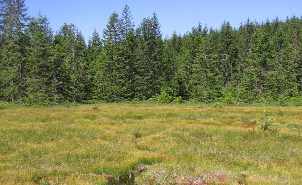 Drámai átalakulás kezdődött a Fekete-erdőben