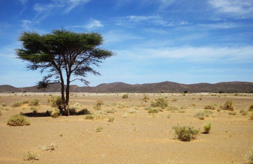 Meglepően sok magányos fa nő a Szaharában