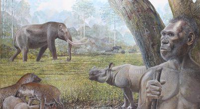 Környezeti átalakulás vezethetett ősi rokonaink bukásához