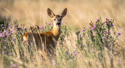 Lesújtó az európai élőhelyek állapota