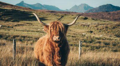 A legendas Skot Bika, Elgol, Scotland