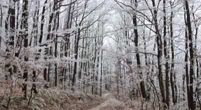 Téli mesevilág