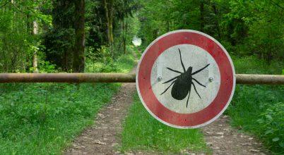 A klímaváltozással újabb betegségek érik el a vadvilágot