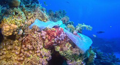 Egyre nagyobb veszélyt jelent a tengeri állatokra a műanyag