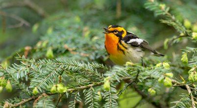 1,5 milliárd madarat mentett meg egy embereket védő törvény