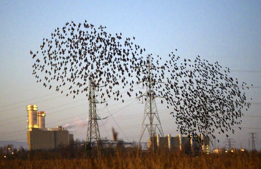 Duna menti összefogás a madarak védelméért
