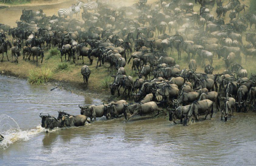 A vándorló fajok rövidebb ideig élnek