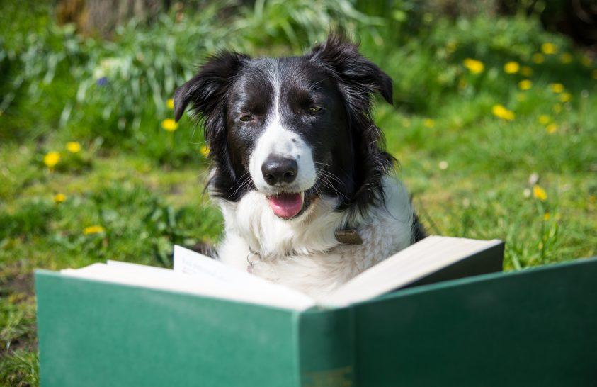 A kutyák szótanulási képességét vizsgálják egy nemzetközi projektben