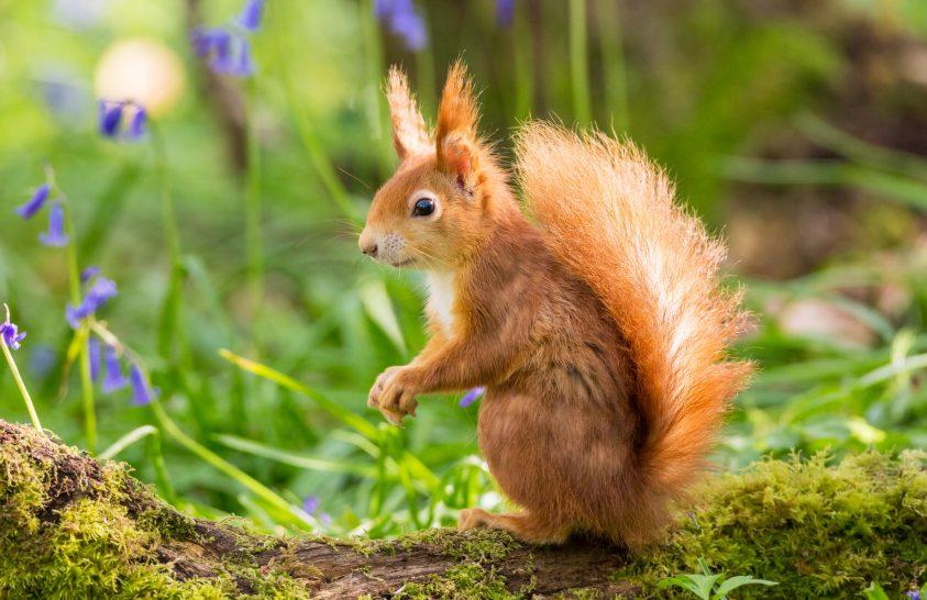 Így hódították meg a mókusok a világot