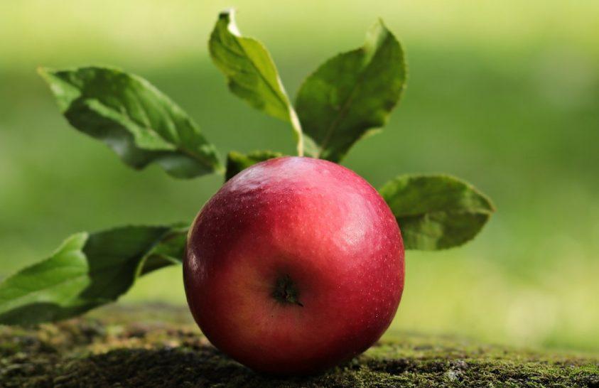 Az alma a selyemút gyümölcse volt