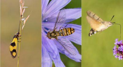 Szavazzunk a 2021-es év rovarára!