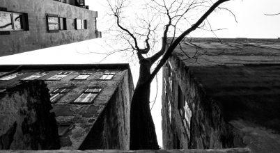 A falak foglya