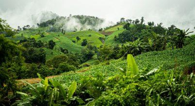 Hiába a vállalások, tovább pusztulnak az erdők