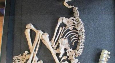 Rekonstruálták egy vaskori tuberkulózisos beteg életét
