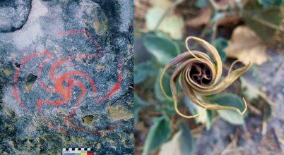 Ebben a barlangban hallucinogén növényt fogyasztottak az őslakosok