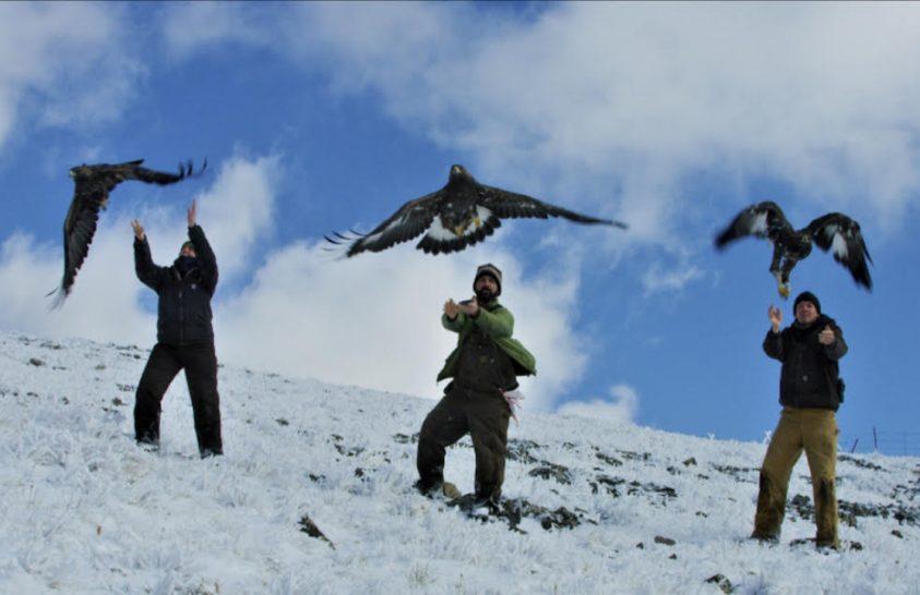Eltérően reagálnak a sarkvidéki állatok a klímaváltozásra