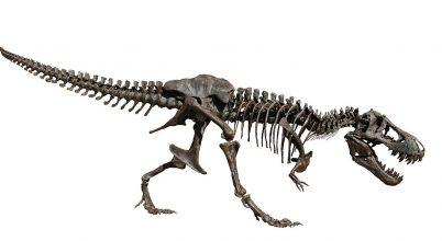 Hatalmas összegért adták el egy T. rex csontvázát
