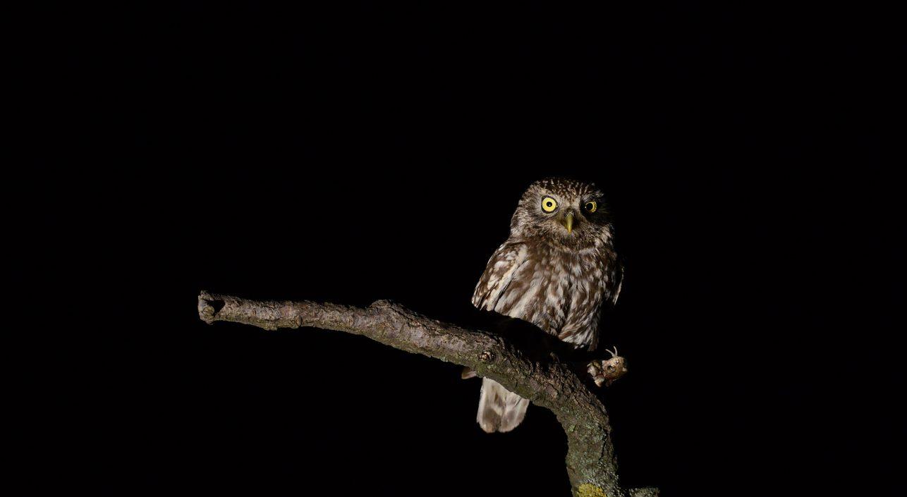 A nap képe: Sikeres éjszakai vadászat