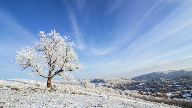 A nap képe: Magányos fa
