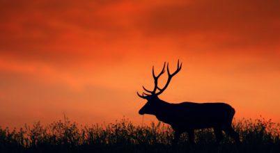 A nap képe: Bíborszínű alkonyat