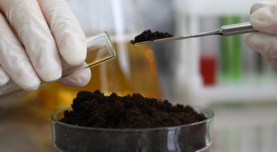 Szennyezett talaj kármentesítése mikrobiológiai segítséggel