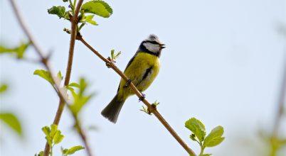 A madárdal is hozzájárul, hogy jól érezzük magunkat