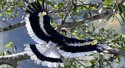 Óriási madár Mianmarból