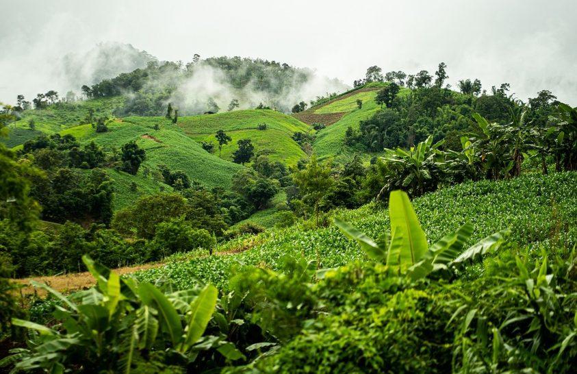 Spanyolországnyi erdőség tűnt el Amazóniából
