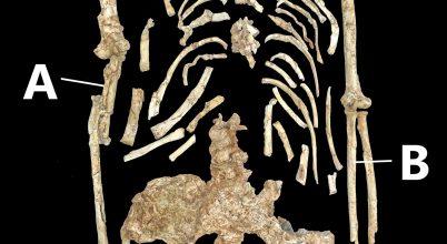 Miről árulkodnak Kisláb hajlított csontjai?