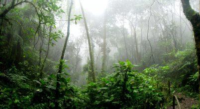 Ősi településekre bukkantak Amazóniában
