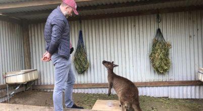 A kenguruk kutyához hasonlóan kommunikálnak az emberrel