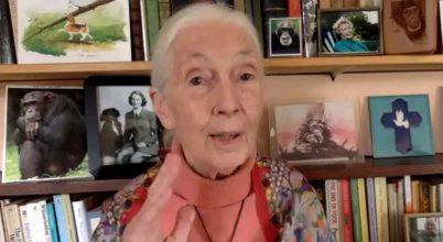 Jane Goodall: Itt az idő a változásra!