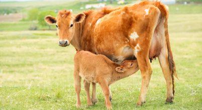 Az utóbbi évek legnagyobb tejipari innovációja