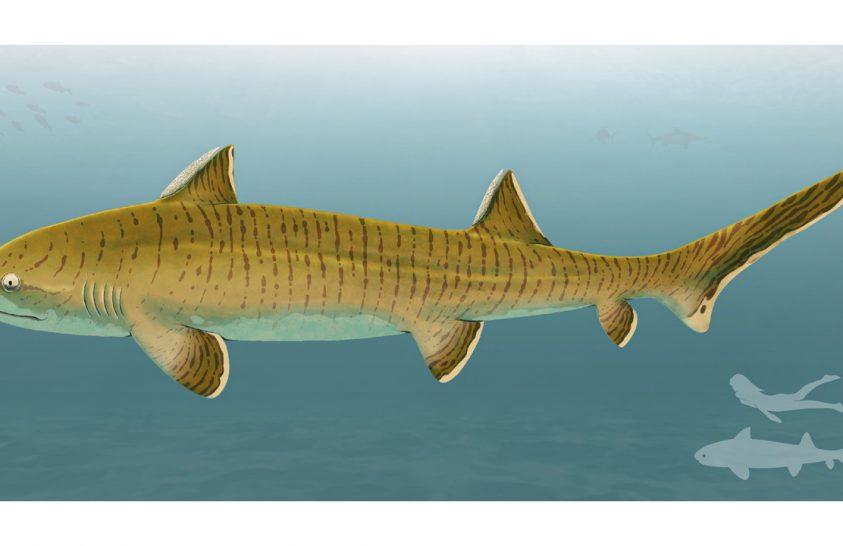 Jura időszaki cápára bukkantak Németországban