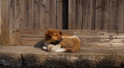 Ételmaradékok segíthették a kutya háziasítását