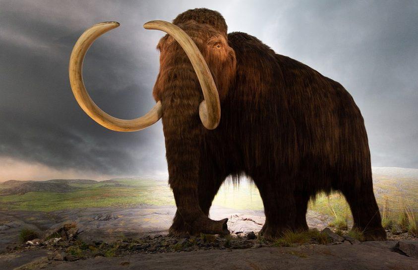 Tovább élhettek a mamutok Yukon területén, mint hittük