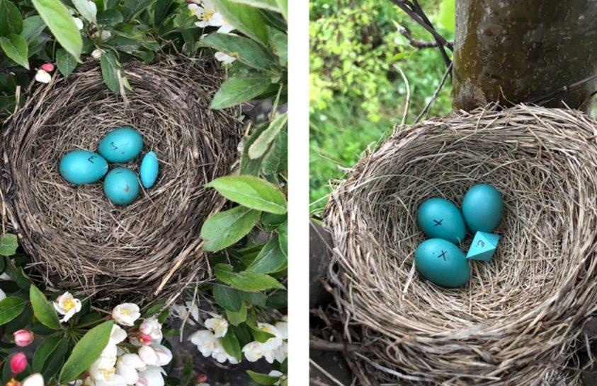 Tesztelték a madarak tojásfelismerési határait