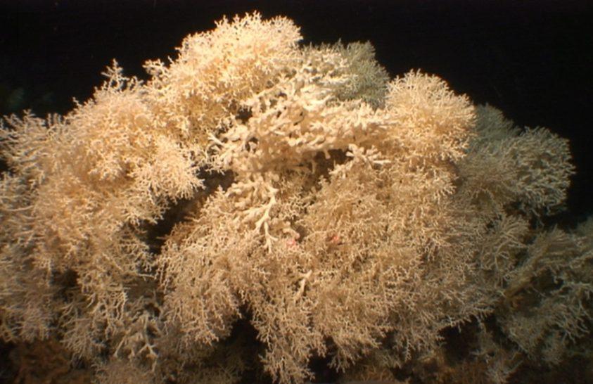 Ez a Mediterráneum legöregebb ismert korallzátonya