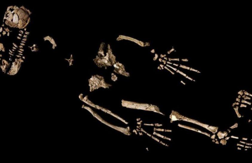 Evolúciós ugrásról árulkodnak ősi rokonunk csontjai