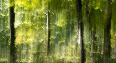 Zuhanó erdő